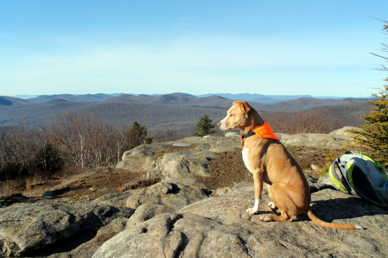 Hadley Mountain Hike