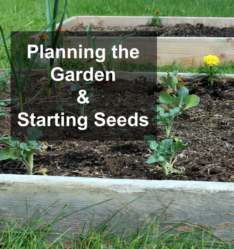 Planning the Garden & Starting Seeds