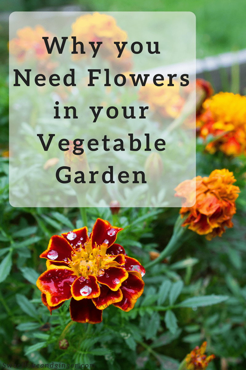 Why you Need Flowers in your Vegetable Garden - and 5 flowers to try