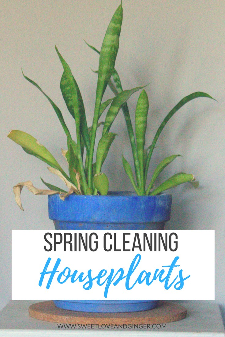 Why you need to spring clean your houseplants